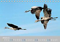 Naturpark am Stettiner Haff (Tischkalender 2019 DIN A5 quer) - Produktdetailbild 1