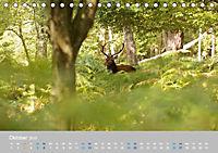 Naturpark am Stettiner Haff (Tischkalender 2019 DIN A5 quer) - Produktdetailbild 10