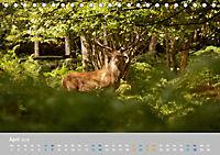 Naturpark am Stettiner Haff (Tischkalender 2019 DIN A5 quer) - Produktdetailbild 4