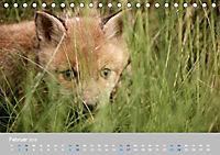 Naturpark am Stettiner Haff (Tischkalender 2019 DIN A5 quer) - Produktdetailbild 2
