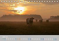 Naturpark am Stettiner Haff (Tischkalender 2019 DIN A5 quer) - Produktdetailbild 6