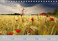 Naturpark am Stettiner Haff (Tischkalender 2019 DIN A5 quer) - Produktdetailbild 7