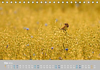 Naturpark am Stettiner Haff (Tischkalender 2019 DIN A5 quer) - Produktdetailbild 5