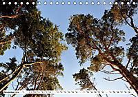 Naturschauspiel Darßer Weststrand (Tischkalender 2019 DIN A5 quer) - Produktdetailbild 11