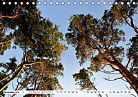 Naturschauspiel Darsser Weststrand (Tischkalender 2019 DIN A5 quer) - Produktdetailbild 11