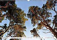 Naturschauspiel Darsser Weststrand (Wandkalender 2019 DIN A3 quer) - Produktdetailbild 11