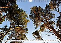 Naturschauspiel Darßer Weststrand (Wandkalender 2019 DIN A4 quer) - Produktdetailbild 11