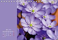 Naturschönheiten im Detail (Tischkalender 2019 DIN A5 quer) - Produktdetailbild 4