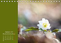 Naturschönheiten im Detail (Tischkalender 2019 DIN A5 quer) - Produktdetailbild 9