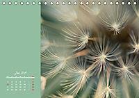 Naturschönheiten im Detail (Tischkalender 2019 DIN A5 quer) - Produktdetailbild 6