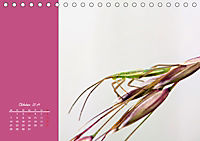 Naturschönheiten im Detail (Tischkalender 2019 DIN A5 quer) - Produktdetailbild 10
