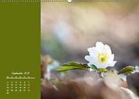 Naturschönheiten im Detail (Wandkalender 2019 DIN A2 quer) - Produktdetailbild 9
