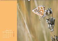 Naturschönheiten im Detail (Wandkalender 2019 DIN A2 quer) - Produktdetailbild 1