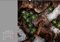Naturschönheiten im Detail (Wandkalender 2019 DIN A2 quer) - Produktdetailbild 12