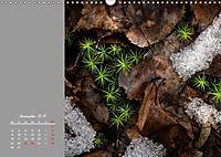 Naturschönheiten im Detail (Wandkalender 2019 DIN A3 quer) - Produktdetailbild 12