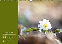 Naturschönheiten im Detail (Wandkalender 2019 DIN A3 quer) - Produktdetailbild 9