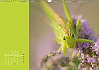Naturschönheiten im Detail (Wandkalender 2019 DIN A3 quer) - Produktdetailbild 5