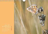 Naturschönheiten im Detail (Wandkalender 2019 DIN A4 quer) - Produktdetailbild 1