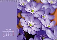 Naturschönheiten im Detail (Wandkalender 2019 DIN A4 quer) - Produktdetailbild 4