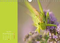Naturschönheiten im Detail (Wandkalender 2019 DIN A4 quer) - Produktdetailbild 5