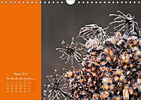 Naturschönheiten im Detail (Wandkalender 2019 DIN A4 quer) - Produktdetailbild 8