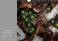 Naturschönheiten im Detail (Wandkalender 2019 DIN A4 quer) - Produktdetailbild 12
