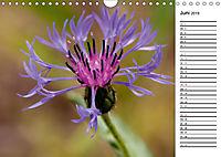 Naturschönheiten Nahaufnahmen (Wandkalender 2019 DIN A4 quer) - Produktdetailbild 6