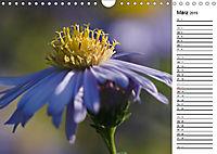 Naturschönheiten Nahaufnahmen (Wandkalender 2019 DIN A4 quer) - Produktdetailbild 3