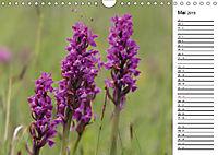 Naturschönheiten Nahaufnahmen (Wandkalender 2019 DIN A4 quer) - Produktdetailbild 5