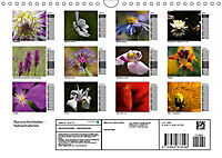 Naturschönheiten Nahaufnahmen (Wandkalender 2019 DIN A4 quer) - Produktdetailbild 13