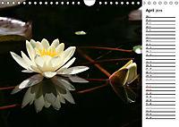 Naturschönheiten Nahaufnahmen (Wandkalender 2019 DIN A4 quer) - Produktdetailbild 4