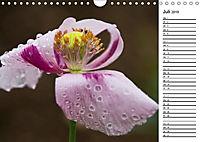 Naturschönheiten Nahaufnahmen (Wandkalender 2019 DIN A4 quer) - Produktdetailbild 7
