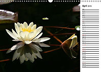 Naturschönheiten Nahaufnahmen (Wandkalender 2019 DIN A3 quer) - Produktdetailbild 4