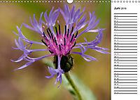 Naturschönheiten Nahaufnahmen (Wandkalender 2019 DIN A3 quer) - Produktdetailbild 6