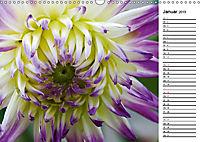 Naturschönheiten Nahaufnahmen (Wandkalender 2019 DIN A3 quer) - Produktdetailbild 1