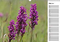 Naturschönheiten Nahaufnahmen (Wandkalender 2019 DIN A3 quer) - Produktdetailbild 5