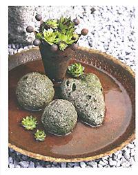 Neue Garten-Deko aus Beton selbstgemacht - Weltbild-Ausgabe