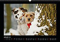 Neues von Elli Pirelli, dem fröhlichen Pinscherdackelmädel (Wandkalender 2019 DIN A3 quer) - Produktdetailbild 1