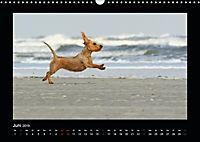 Neues von Elli Pirelli, dem fröhlichen Pinscherdackelmädel (Wandkalender 2019 DIN A3 quer) - Produktdetailbild 6