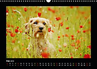 Neues von Elli Pirelli, dem fröhlichen Pinscherdackelmädel (Wandkalender 2019 DIN A3 quer) - Produktdetailbild 5