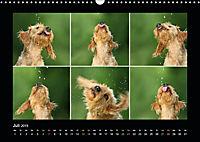 Neues von Elli Pirelli, dem fröhlichen Pinscherdackelmädel (Wandkalender 2019 DIN A3 quer) - Produktdetailbild 7