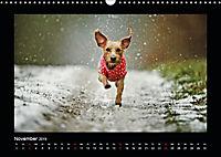 Neues von Elli Pirelli, dem fröhlichen Pinscherdackelmädel (Wandkalender 2019 DIN A3 quer) - Produktdetailbild 11