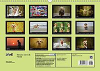 Neues von Elli Pirelli, dem fröhlichen Pinscherdackelmädel (Wandkalender 2019 DIN A3 quer) - Produktdetailbild 13