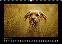 Neues von Elli Pirelli, dem fröhlichen Pinscherdackelmädel (Wandkalender 2019 DIN A3 quer) - Produktdetailbild 10
