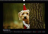 Neues von Elli Pirelli, dem fröhlichen Pinscherdackelmädel (Wandkalender 2019 DIN A3 quer) - Produktdetailbild 12