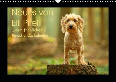 Neues von Elli Pirelli, dem fröhlichen Pinscherdackelmädel (Wandkalender 2019 DIN A3 quer), Kathrin Köntopp