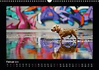 Neues von Elli Pirelli, dem fröhlichen Pinscherdackelmädel (Wandkalender 2019 DIN A3 quer) - Produktdetailbild 2