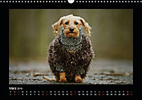 Neues von Elli Pirelli, dem fröhlichen Pinscherdackelmädel (Wandkalender 2019 DIN A3 quer) - Produktdetailbild 3