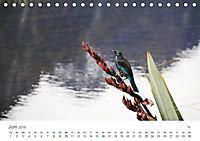 Neuseeland - Vielfalt der Südinsel (Tischkalender 2019 DIN A5 quer) - Produktdetailbild 6