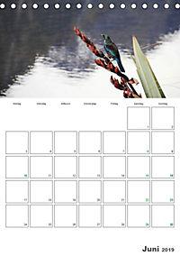 Neuseeland - Vielfalt der Südinsel (Tischkalender 2019 DIN A5 hoch) - Produktdetailbild 6